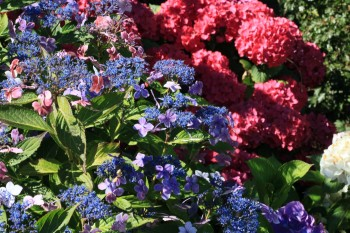 Amrum Garten Blumen